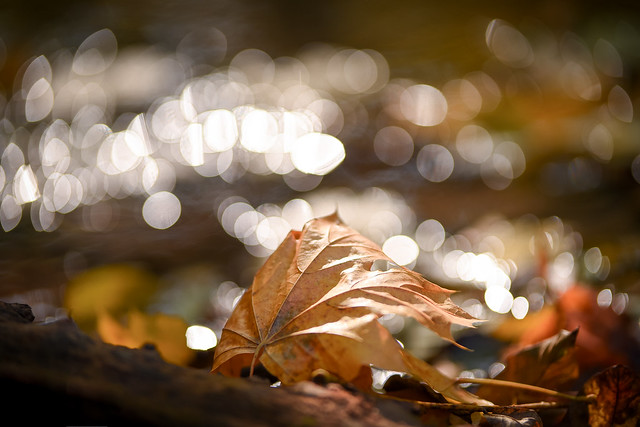 Simply autumn...(3)