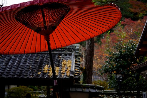 Parasol and Autumn Leaves