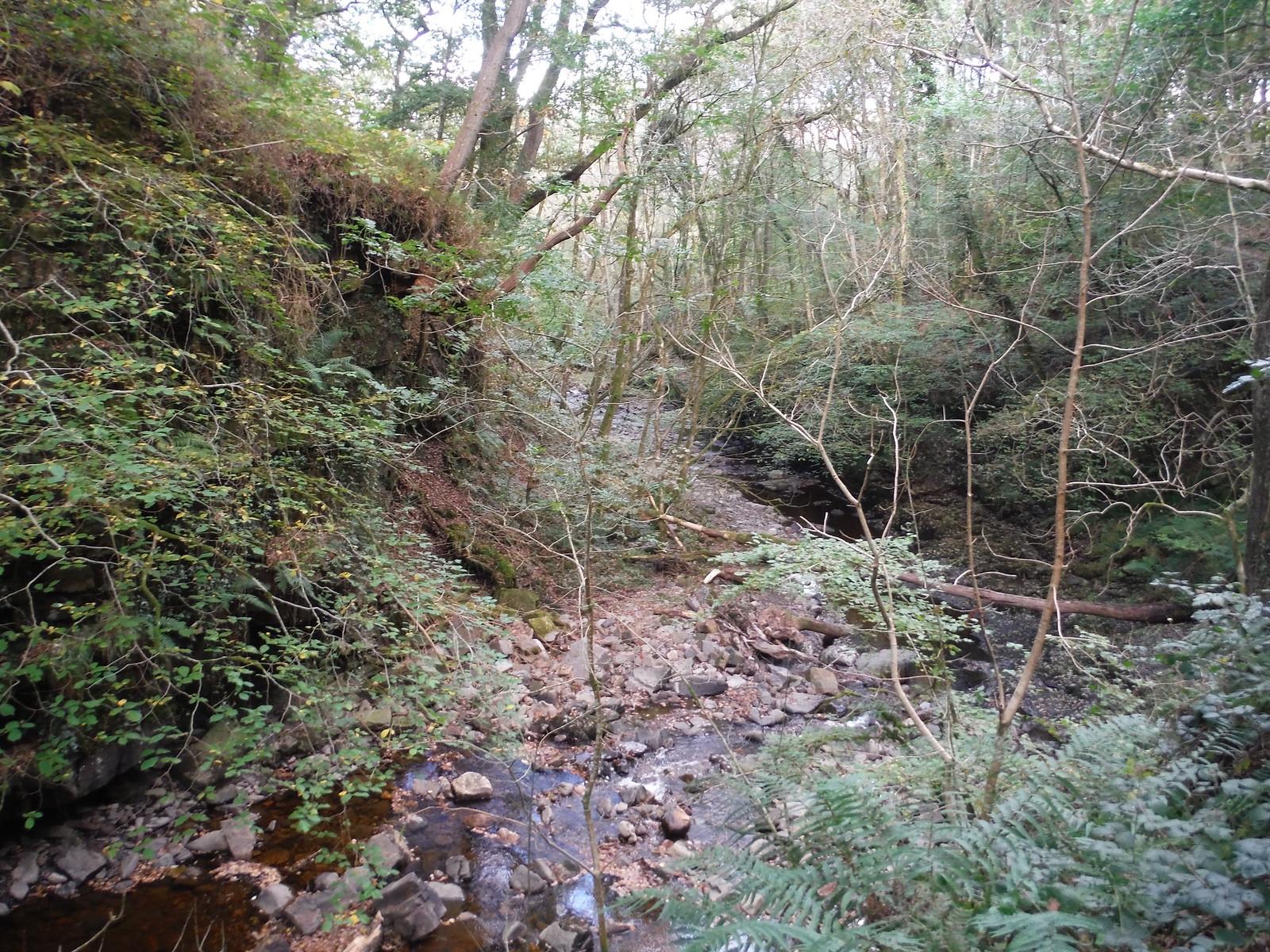 In the Nant Llech Valley (II) SWC Walk 280 Henrhyd Falls - Sgwd Henrhyd (Craig y Nos Circular)