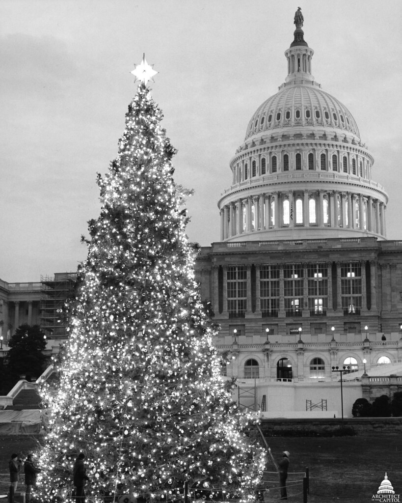 Capitol Christmas Tree.1984 U S Capitol Christmas Tree The 1984 Tree Was A 58 Fo