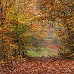 Forest joy  :-)