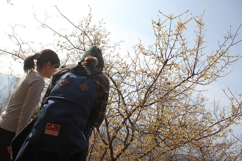 2014-02-01_00122_宝登山