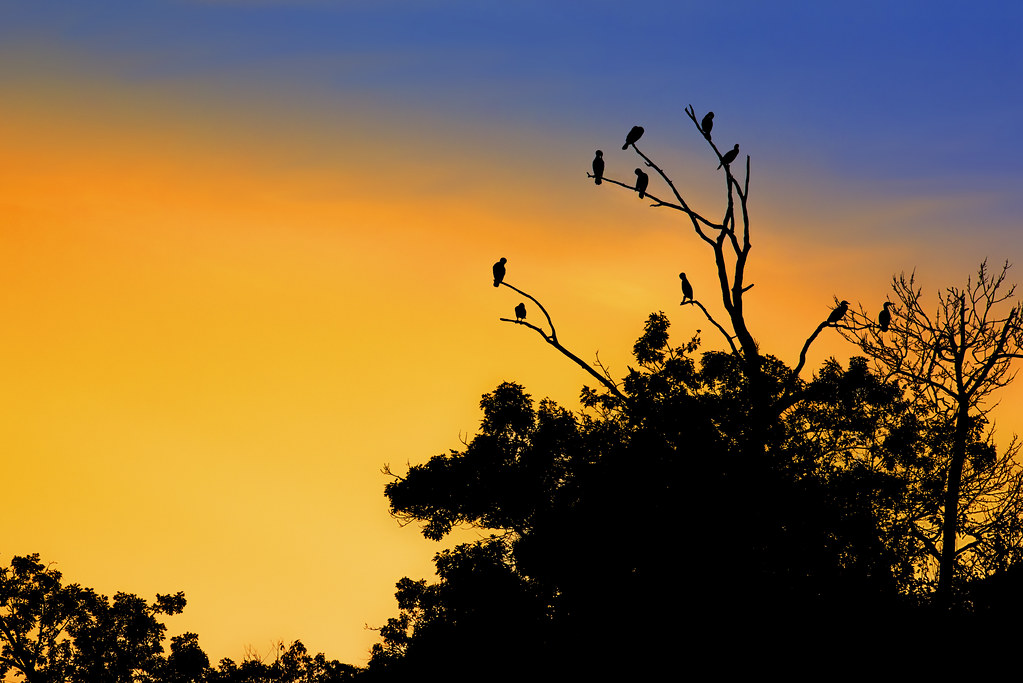 The Birds at Sunset