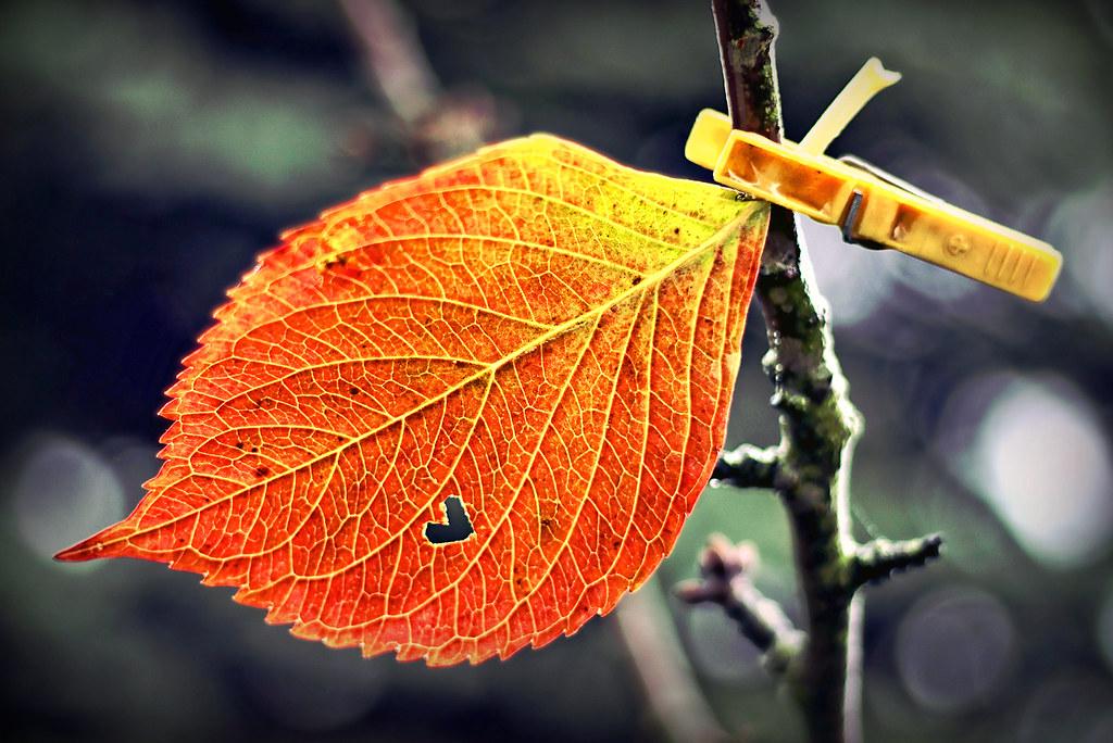 I renew the autumn ;-)