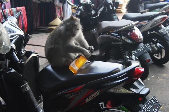Monkey in Ubud