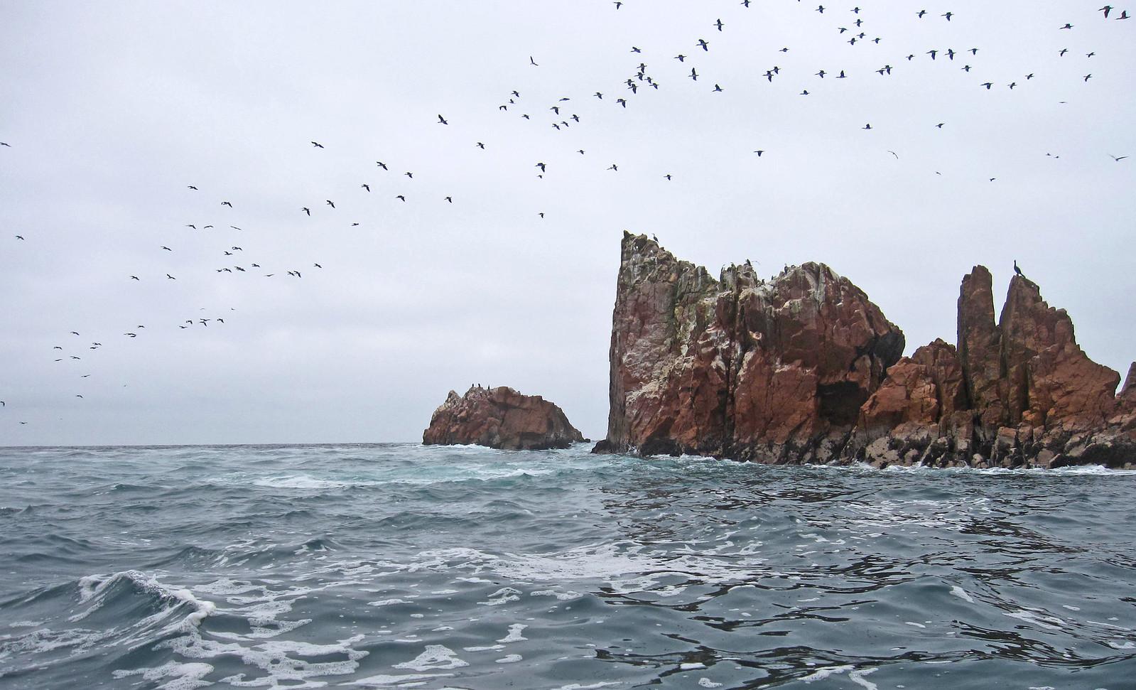 Islas Ballestas 103