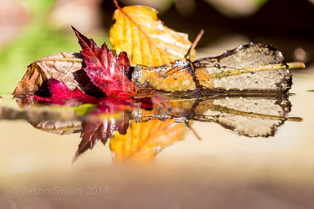 Autumn's Fragile Beauty - IMG_2761