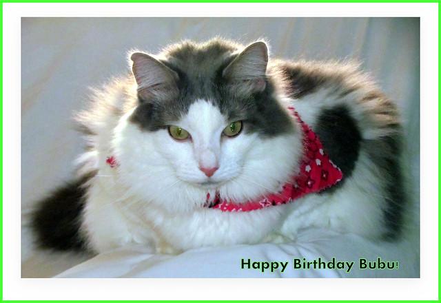 Happy Birthday Bubu!