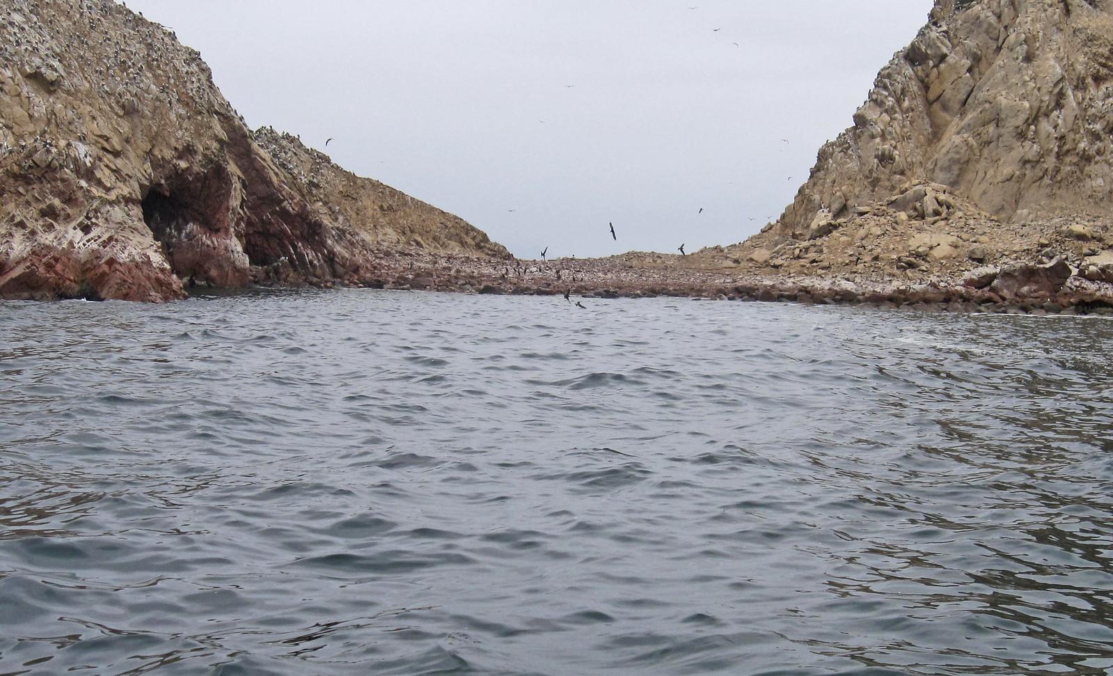 Islas Ballestas 82