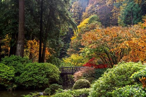 portland oregon japanesegarden fall autumn october canon eos5dmarkiii pacificnorthwest