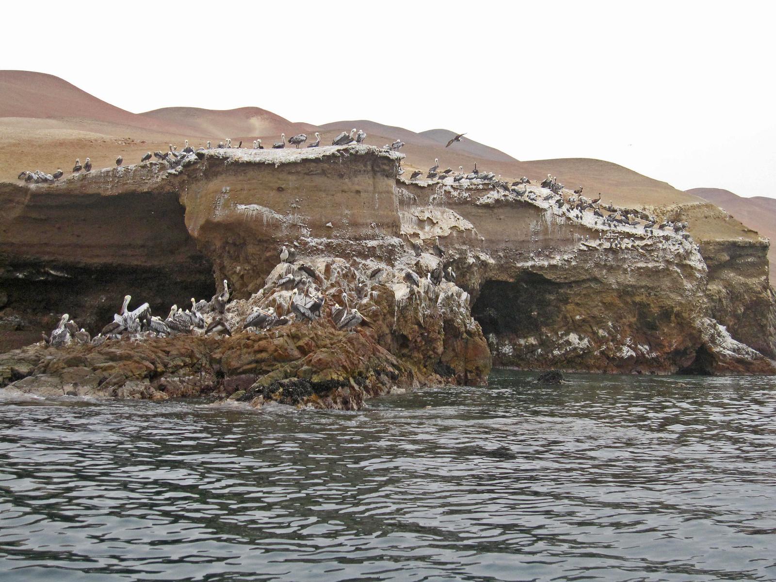 a Islas Ballestas 10