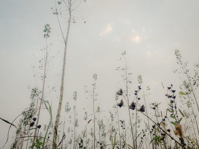 Vegetazioni