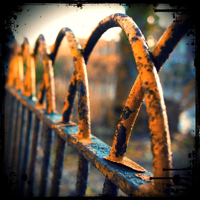 Autumn Fence Friday