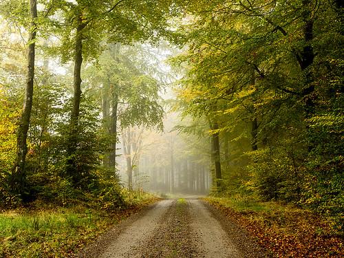 autumn nature fog forest sweden halland
