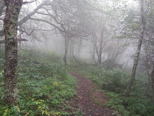 foggy trail near Bald Mountain