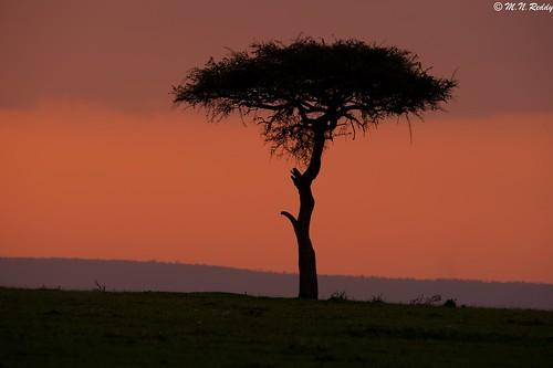 silhouette kenya masaimaranationalpark