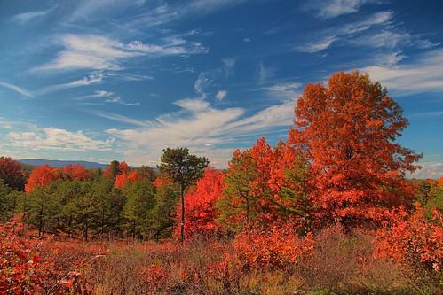 autumn trees clouds canon autumncolors hdr highdynamicrange canont4i