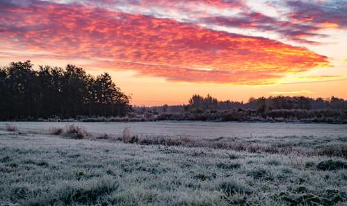 dawn fire frost hss ice sky sliderssunday sundawn sunrise trees