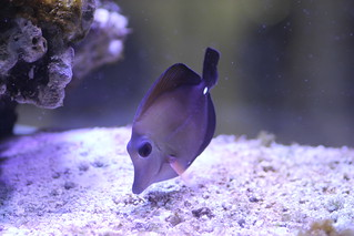 Scopas Tang | by christopheruthe