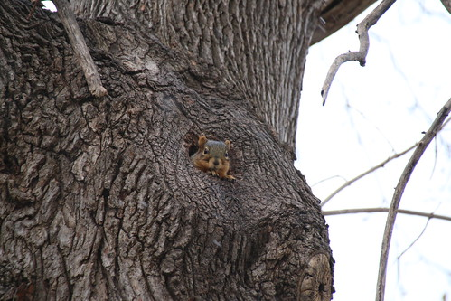 180/365/3102 (December 8, 2016) - Squirrels in Ann Arbor at the University of Michigan (December 8, 2016) | by cseeman