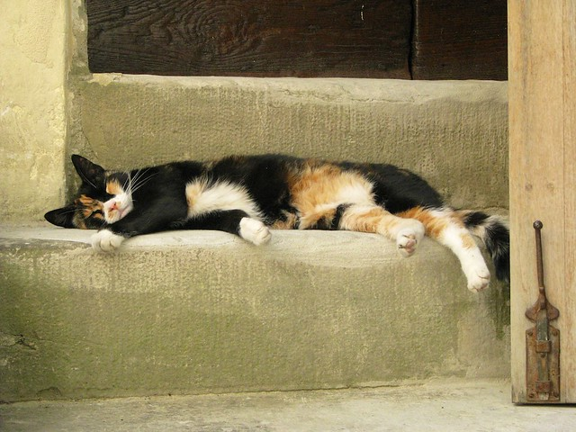 sleeping-cat-tuscany-cr-brian-dore