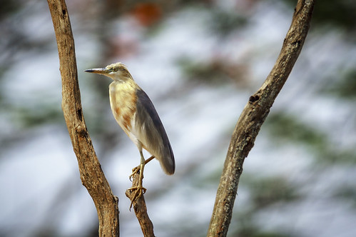 bird nature wildlife birding tamron 150600 nex6