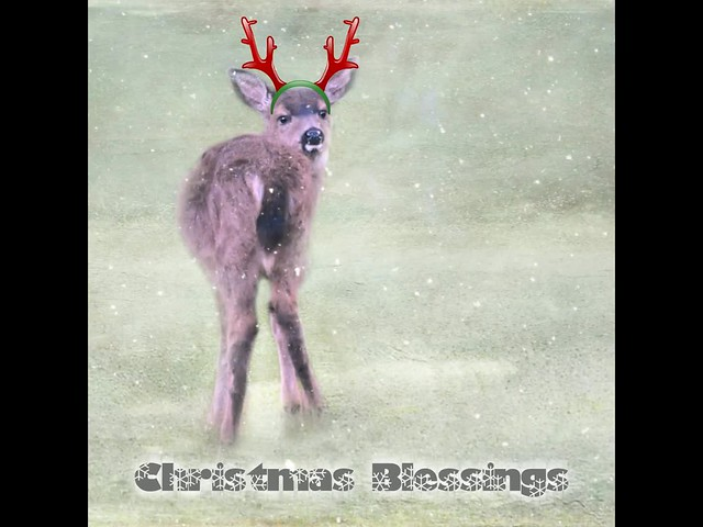 christmas blessings . . .