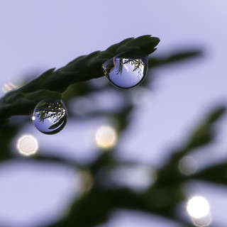 Drops on Branch | by aldenchadwick