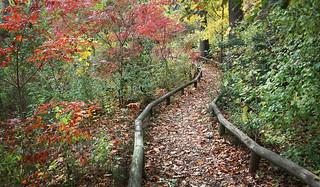Autumn Road | by thirdblade
