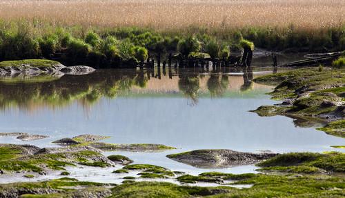 water river wetlands marsh tamar launceston tamarriver