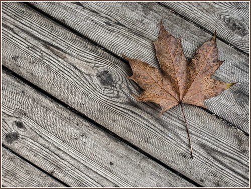 Autumn leaf | by PeS-Photo