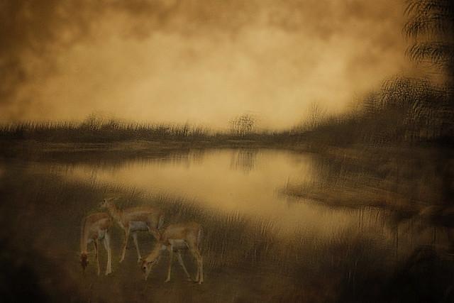 antelopes at the lake