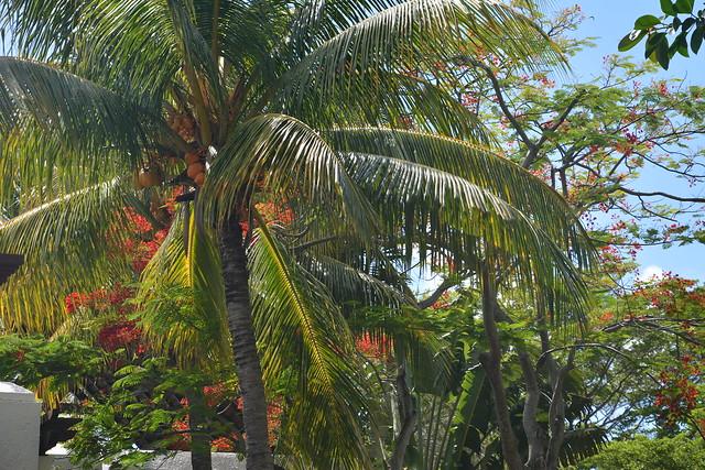 Mauritius 0792