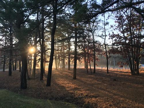 nature trees fog sunrise