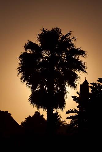 sunset southafrica palm portelizabeth