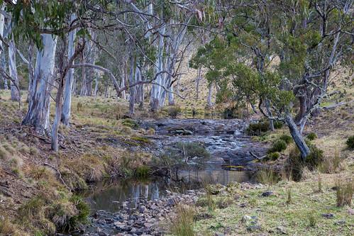 wicked waterfallway australiatriptravelvoyageroadtripdeervalenouvellegallesdusudaustralie