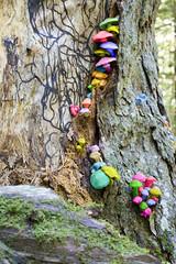 Hemlock Ravine Mushrooms