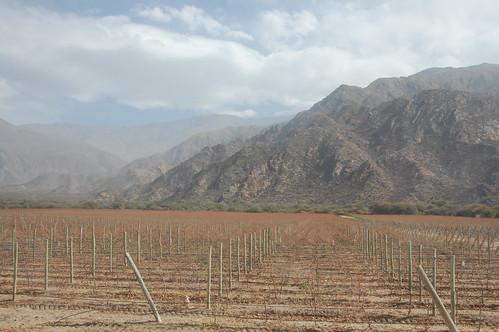 Vineyards Outside Cafayate, Argentina | by blueskylimit