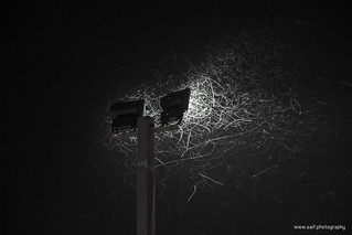 Plying Insects at Night   by Saif.Photography