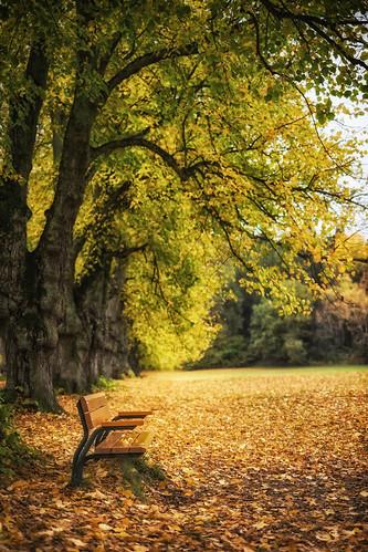 autumn fall nature stockholm sofa avenue bromma åkeshov fujifilmxt1