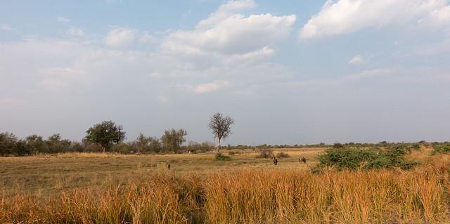 Moremi, landscape