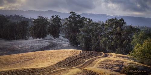 california road trees grass afternoon dirt grasses grassland palo alto grasslands arastradero