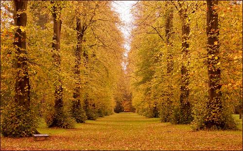 autumn trees forest sony westonbirt limetrees