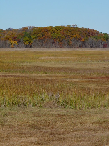 spartinapatens spartinaalterniflora spartina poaceae poales cordgrass grass saltmarsh marsh creek trees foliage autumn cheesequakecreek cheesequakestatepark middlesexcounty nj newjersey fav10