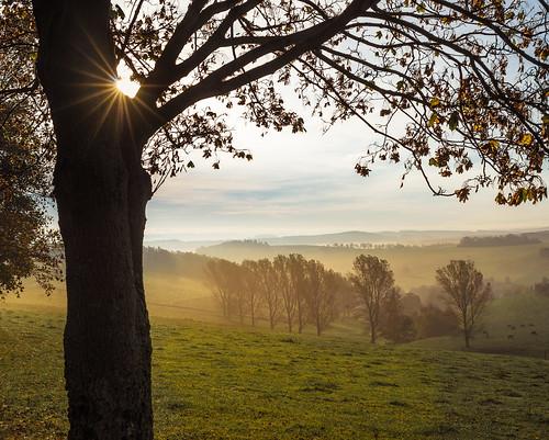 2014 aufnahmejahr fog herbst jahreszeiten landscape landschaft lichtundzeit motiv nebel sonne autumn gelenauerzgebirge sachsen deutschland baum
