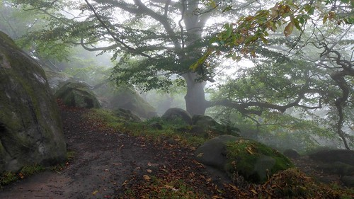 Cratcliffe Tor woodland | by Chris Morriss