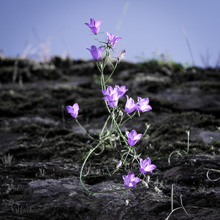 Sci-Fi Flower | by quattrostagioni