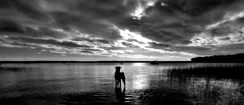 morning sea blackandwhite dog white ny newyork black reflection water grass silhouette clouds creek sunrise boats island harbor three boat hands hamptons long ryan walk south fork east darby launch hampton mile easthampton threemileharbor grennan rwgrennan rgrennan