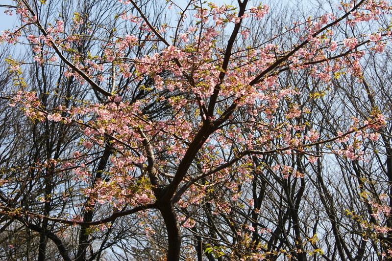 2014-03-16_00079_高松山