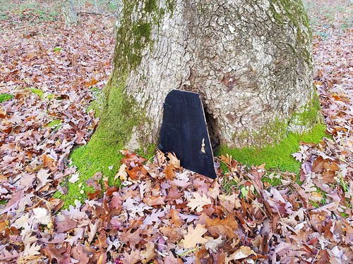 Home of a gnome along the Pinchot Trail